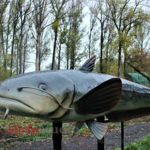 Park Ryb Skwierzyna – nasze modele ryb słodkowodnych