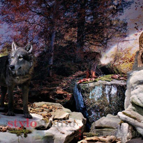 Dioramy Przyrodnicze dla Gorczańskiego Parku Narodowego