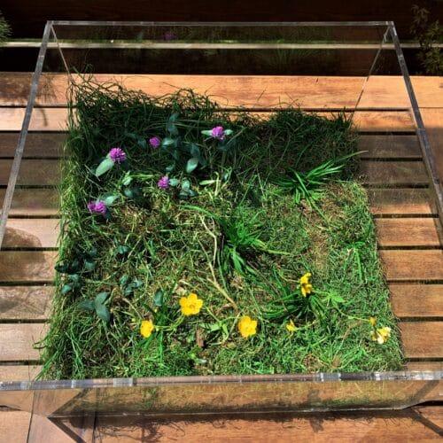Mini diorama – wiosenna łąka